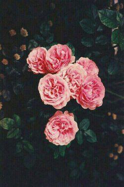 ❁ گلی را پر پر نمیکنم برای دانستنه بودن یا نبودنت...از آن مراقبت میکنم تا روزی ک تقدیمت کنم ❁