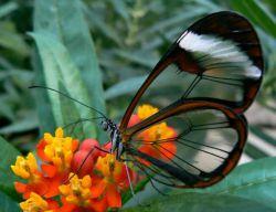 پروانه صفت گرد جهان میگردم,,چه میبینم؟؟؟؟