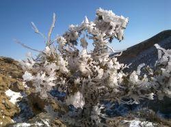 درخت یخی(کال بچری21-11-94)