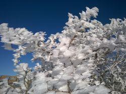 درخت برفی(21-11-94)