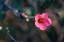 تقدیم به همه مردم خوب و گل ایران