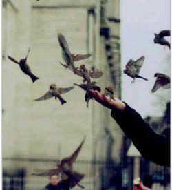 تا نیمه چرا ای دوست؟! لاجرعه مرا سرکش!       من فلسفه ای دارم؛ یا خالی و یا لب ریز!     صبح آدینه تون به عشق!