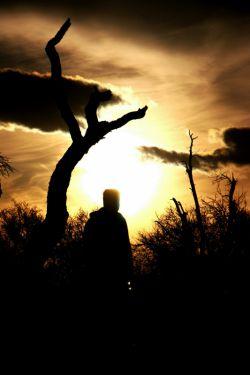 صائب فسردهایم، بیا در میان فکن// از قول مولوی غزل عاشقانهای....... هنوز دلمان برای مولانا میشَنگَد