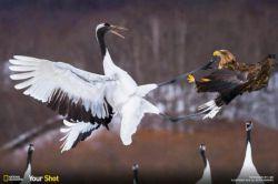 جنگ پرندگان