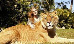 حیوانی به دست بشر  شیر نر +ببر ماده  به نام لایگر.ناگفته نماند هیچ شیر نر به ماده ببر نمیتواند نزدیک شود  درحیات وحش موجب مرگ شیر نر شده