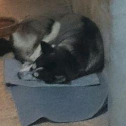 لوسی وخوابیدنش روی موکت