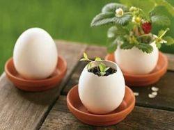 ابتکار در کاشت گل و گیاه در خانه، استفاده از تخم مرغ  www.ibbg.ir/koobeh