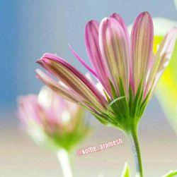 سلام یه بغل آرزوی خوشبختی برای شما