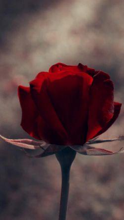 امشب، شبِ تولدِ یکی از بهترین هاست :)  حمید جان .. از تهِ دل، برات آرزوی سلامتی و شادی دارم ..    امیدوارم همیشه دلت آرووم باشه و روزگار بر وفق آرزوهات ..  تولدت مبارک دوستِ خوبِ من  :)  @chavoshi
