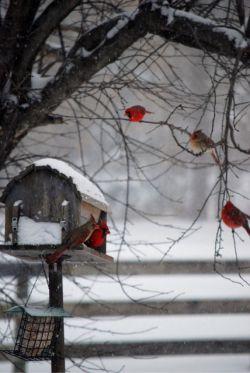 """پرنده گفت : """" چه بویی ، چه آفتابی ، آه بهار آمده است و من به جستجوی جفت خویش خواهم رفت . """"     پرنده از ایوان پرید ، مثل پیامی پرید و رفت پرنده کوچک بود پرنده فکر نمیکرد پرنده روزنامه نمیخواند پرنده قرض نداشت پرنده آدمها را نمیشناخت پرنده روی هوا و بر فراز چراغ های خطر در ارتفاع بی خبری میپرید و لحظه های آبی را دیوانه وار تجربه میکرد     پرنده ، آه ، فقط یک پرنده بود"""