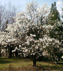 نرم نرمک میرسد اینک بهار؛ خوش به حال روزگار؛ خوش به حال روزگار؛ خوش به حال روزگار ....