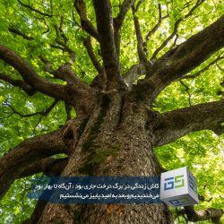 روز درختکاری گرامی باد