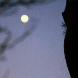 دوباره نیمه شب است و خودت که میدانی /من و خیال تو و این سکوت طولانی... (استاد شهریار)