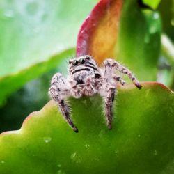 عنکبوت امروز وقتی یک بارون لطیف و خوب میزد دیدم از تو گلها اومده بیرون... میدونستید عنکبوت ها 8 تا چشم دارند؟!