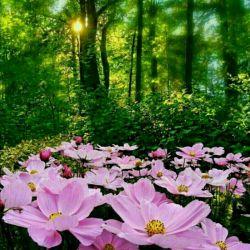 این گلهای خوشگل تقدیم به شما