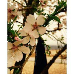یقین داشته باش که خداوند تورا عاشقانه دوست دارد،   چون درهربهاربرایت گل می فرستد و هرروزصبح آفتاب رابه توهدیه