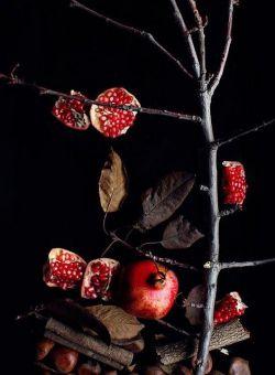 """. . . پدربزرگم مردی آزادی خواه بود پیش از آنکه تیربارانش کنند تمام شعرهایش را پای درخت انار باغچه چال کرد من هیچ وقت شعرهایش را نخواندم اما از انارهای باغچه می شود  فهمید """" آزادی """" باید سرخ و شیرین باشد ."""