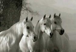 نجیب و با وفا باش همچو اسب