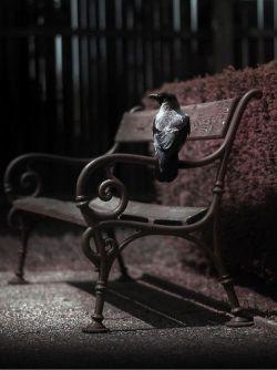 در این جادو شبِ   پوشیده از برگِ گلِ کوکب...  دلم ,دیوانه, بودن با تو را میخواست..  دلم دیوانه بودن باتو رامیخواست....  #مهدی_اخوان_ثالث