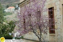 قصر #شهرداری شهر #جزین