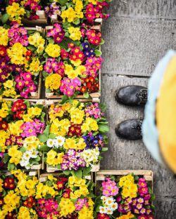 چشم می بندم، باغ رنگین، باغ رویاها، باغ مهر و مهربانی ها، یک نفر در خاطراتم می شود روشن، می رسد از دور، می رسد تا من، می نشیند چشم در چشمم، تویی، اری تو، اما تو....، محمدرضا عبدالملکیان:. .:عکس علیرضا خطیبی