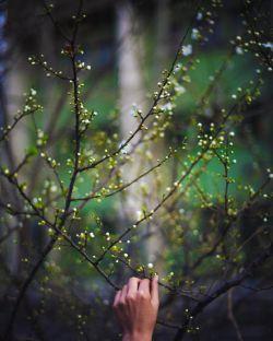 ورق میزنم تو را، از گریه به خنده، از زمستان به بهار عباس حسین نژاد:. .:عکسalirezakhatibi