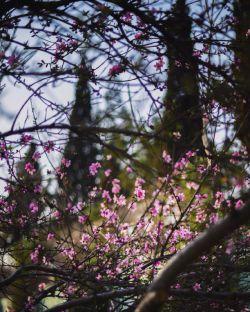 بهار، ادامه ی پیراهنِ توست، که روزی میانِ گُل ها وزیده است. سهیل محمودی_alirezakhatibi
