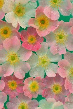 بوی بهار میآید  تقدیم به تمام دوستان بهاری  لنزوری خودم