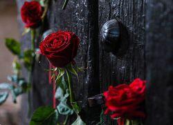 پهلو شکسته دل شکسته ای را ناامید نمی کند! دلت که شکست برای ظهور دعا کن رفیق...