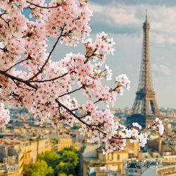 اینم یه عکس بهاری خوشگل...