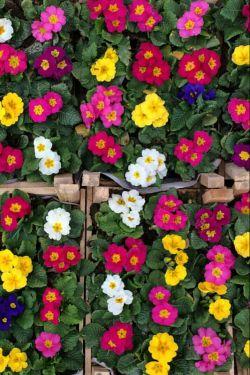 لااقل کمی از بهار یاد بگیر ... ببین ؛ همین روزهاست که بیاید