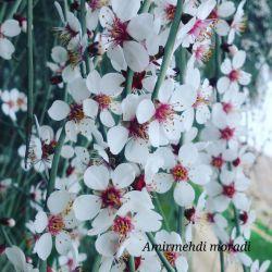 تصاویر زیبا از طبیعت فاریاب