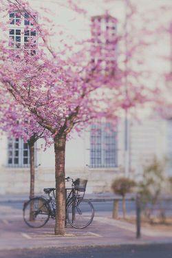 بهار.... و این همه دلتنگی؟! نه، شاید فرشته ای به اشتباه فصل ها را ورق زده باشد. رضا کاظمی