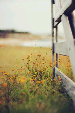 و بهار می خندد به من.. به پیچک تنهایی تو! که دلش در پاییز جامانده...... تابان رضازاده
