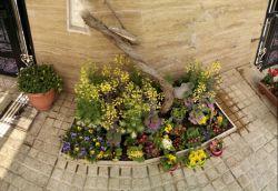 پانروما گل های باغچه