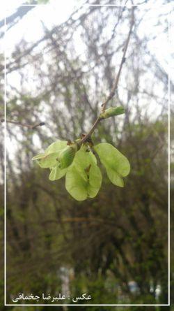 * پاس بداریم زیبایی و طراوت بهار را ...