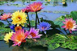 مثل آب وباران مهربان باش که در ترنمش علف هرز و گل سرخ یکیست♡♡