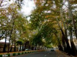 طبیعت داخل شهر