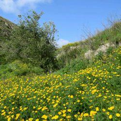 مناظر چشم نواز #کوه و #دشت های #جنوب #لبنان در زیباترین فصل سال