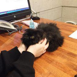 گیمو-گربه ای با بزرگترین چشم