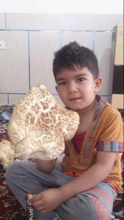 این قارچ دوکیلوی توسط پدرم در کوهای اطراف شهرمان پیدا کردیم
