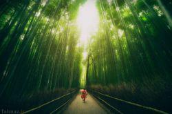 جنگل بامبو – کیوتو – ژاپن  این خیابان در Arashiyama واقع شده است و یکی از نقاط گردشگری کشور ژاپن محسوب می شود. دو طرف خیابان را بامبوهای بلند پوشانده اند که منظره ای رویایی به این خیابان می بخشند.