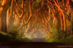 پرچین های تیره – ایرلند شمالی  جاده ای از درختان کج و معوج که در قرن 18 میلادی کاشته شده اند نیز از دیگر خیابان های جالب و عجیب دنیا است. این جاده که در کشور ایرلند واقع شده است بیشتر شبیه داستان های جن و پری است تا یک خیابان واقعی. شاید خمیدگی این درختان تا اندازه ای ترسناک باشد اما تونل بسیار جالبی درست کرده اند.