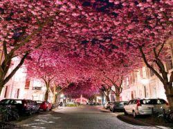Heerstrasse – بن – آلمان  این خیابان فوق العاده است. در فصل بهار که درختان شکوفه می دهند، این خیابان به بخشی از بهشت تبدیل می شود. نام آن نیز «بلوار شکوفه های گیلاس» است.