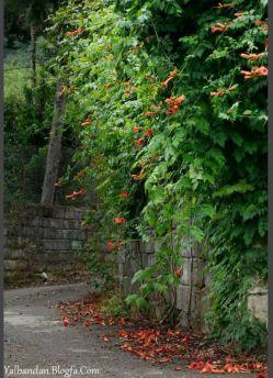 یالبندان - Yalbandan / کوهپایه دهم