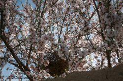 بهار در گلدشت