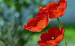 سلام دوستای گلم تقدیم به همتون که خیلی گلین#گل