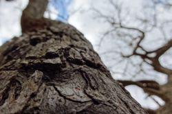 درخت یعنی زندگی عکس از ما