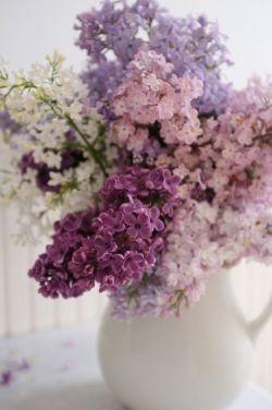 ❧✿♡   مادرم یاسها عطرشان را از بوی تن تو بـہ عاریت میگیرند   شبنم گل واژه اشڪهای توست   ای شقایق دشتستان صبوری   ای هم آغوش پروانهها   ای صفای گل سرخ   ای نرگس عشق   تو از همـہ گلها زیباتر و از همـہ آنها خوشبوتری   در سالروز یاد تو عطر همـہ گلهای شڪفتـہ را نثار وجودت میڪنیم ♡✿❧  @m1349p