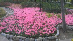 باغ ایرانی در بهار. ده ونک تهران